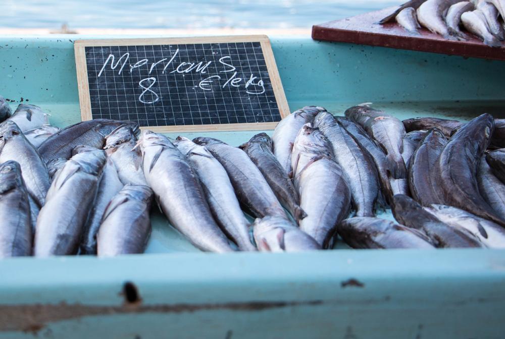 Marseille, retour de pêche, Vieux port, Marché aux poissons, Merlan
